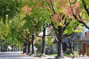 Kent News: City of Kent wants community input regarding neighborhood trees.