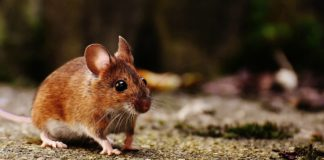 Dept. of Health confirms a fifth case of hantavirus.