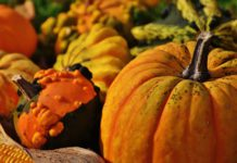 Kent Events: Things to Do in Kent, Washington in October 2017