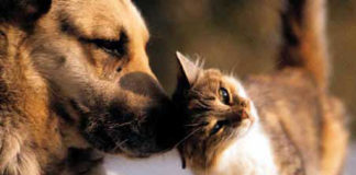 Kent Resources for Pets & Animals