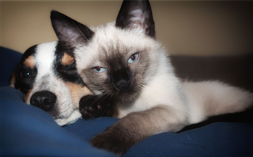 2015's Top 10 Names for Cats and Dogs in King County