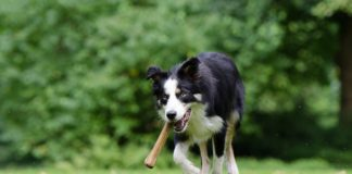 Free Things To Do in Kent: Dog Days of Summer