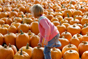Things To Do in Kent, Washington: October 2016 Events in and around Kent
