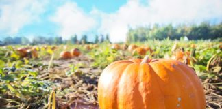 Kent Events: Things to Do in Kent, Washington, Oct. 2016
