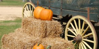 Fall Fun Round-up