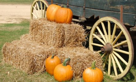 Family Fun Fall Round-up