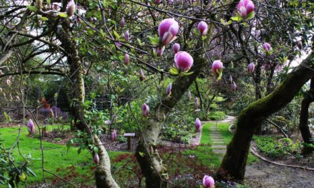 Soos Creek Botanical Garden and Heritage Center is Open for the Season