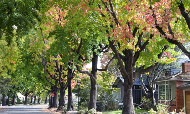 City Wants Community Input about Neighborhood Trees