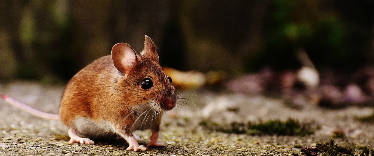 Fifth Case of Hantavirus Confirmed, Most Reported Since 1999