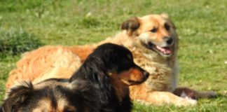 Kent Event: Dog Days of Summer at Kent Senior Center, Aug. 5