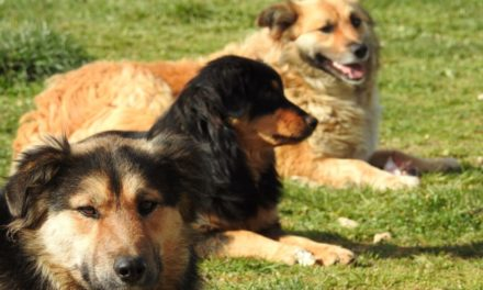 Enjoy the Dog Days of Summer at Kent Senior Center, Aug. 5