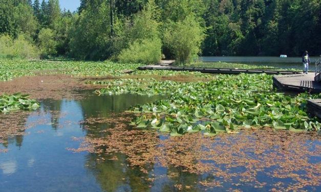 Residents warned about high level of toxic algae at Lake Fenwick