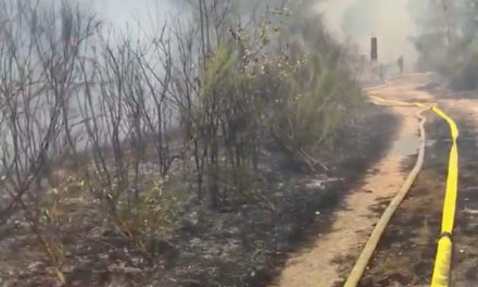 Brush fire burns near Covington Sunday