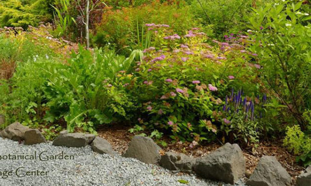 Fall Plant Sale will be this weekend at Soos Creek Botanical Garden