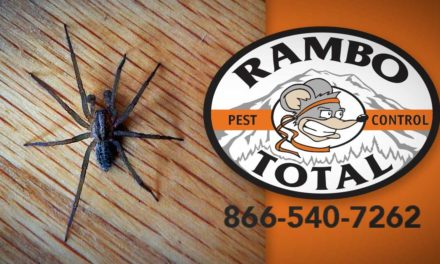 Spiders buggin' you? Get help from the experts at Rambo Total Pest Control