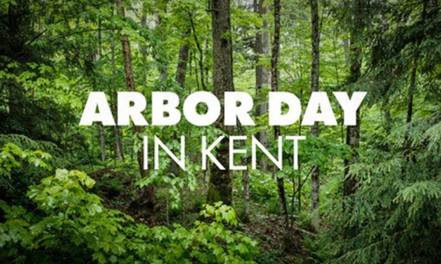 Arbor Day will be celebrated this Saturday, Nov. 14 at Clark Lake Park